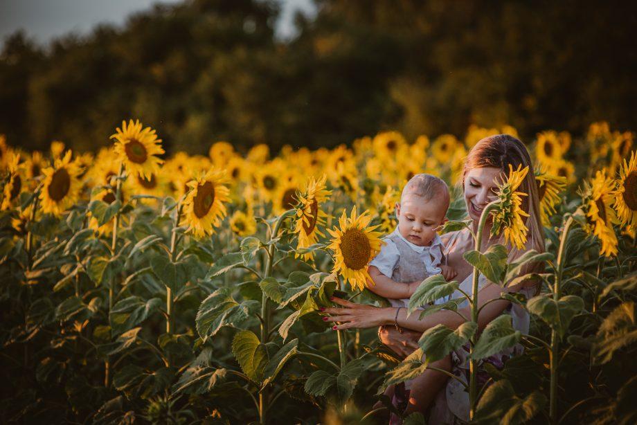 Sesja rodzinna w słonecznikach